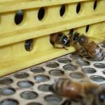 花粉トラップ